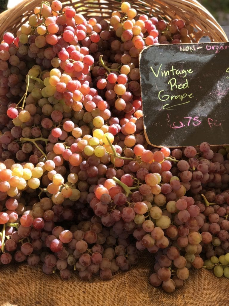 Vintage Red grapes for a cauliflower rice salad with grapes, cucumber and tarragon